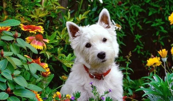 Dog-in-the-garden